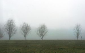 Trees in Mist by muffet1