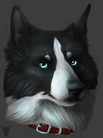 Jellicle - Gift for friend by TieWolf