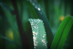 Do the dew by Coltography
