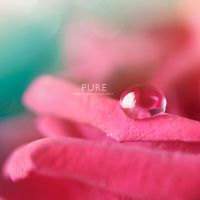 Pure rose by wihad