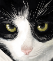 Black and white - cat and light by Amber100