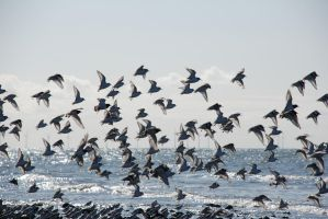 Birds by the sea by Quinnphotostock