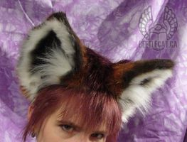 Red Fox Ears by Beetlecat