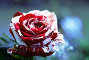 Bloodred Beauty by ElyneNoir