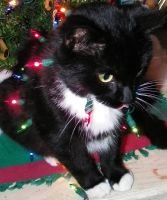 Holiday Kitty Im still glowing by Melrainbow