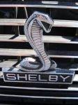 Shelby Snake by fyredancer911