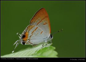 PU Butterflies 310508 VI by log1t3ch