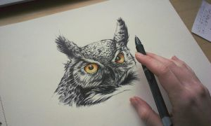 Angry owl,ballpoint - WIP II. by Mishice