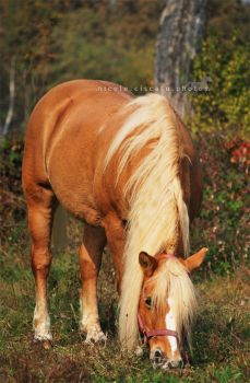 Dolly II by firegold