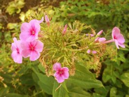 In A Bunch by POETRYTHROUGHLENS