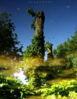 tree in a pond by alahay