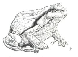 frog by Ankaraven