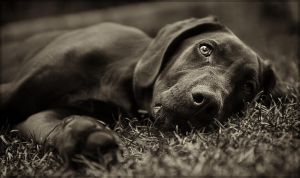 My dog by Gourdman