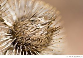 Thistle Brown I by butterfly36rs