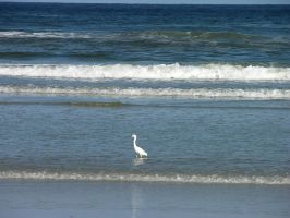 Crane on Beach Stock by FairieGoodMother