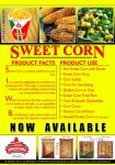 Sweet Corn Leaflet Poster by joscardozo