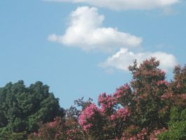 The sky and those pink flowers by 888Jess888