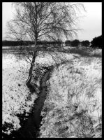 baum und fluss - tree a. river by minipliman