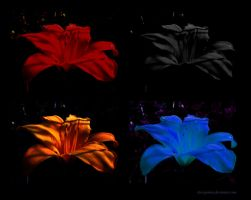 Shadows Variations... by DiscoPotato