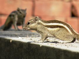 two squirrels by kumarvijay1708