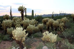 Cactus 1664 by mammothhunter