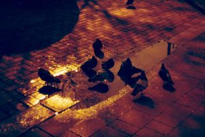Lomography Redscale #3 by ncaph