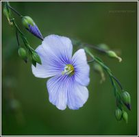 The nature beauty by Viand