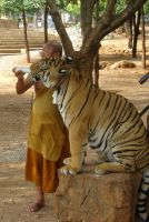 Monk and Tiger by BioHazardSystem