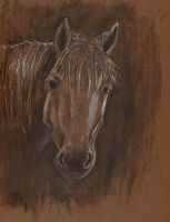 charcoal horse by PickedPockets