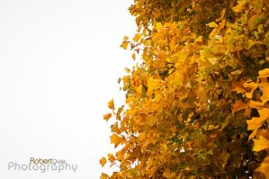 the Autumn by Robbanmurray