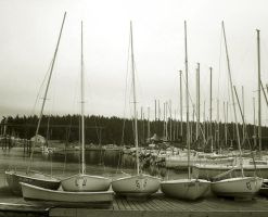 Oak Harbor: Marina by Photos-By-Michelle
