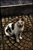 cute little cat hdr by firatoz