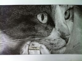 'Hidden Predator'  - 2013 - (Drawing) by Stevegillettart