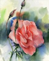 Plein air. Rose by OlgaSternik