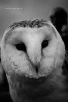 Haunting Owl by Fudge-Photography