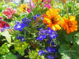 Colorful Flowers by jim88bro