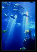 Underwater Dream II by nunovix