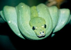 Green Tree Snake by Thors-Hammer77