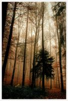 Misty Wood by LLr0cks