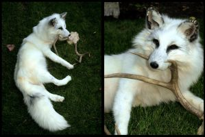 White Marble fox by AdarkerNEMISIS