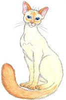 Flame-point siamese cat by meezerkat