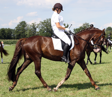 Dressage stock 10 by ByMelody