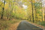 Golden Road by GlassHouse-1