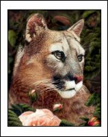 Portrait of a Puma by oomu