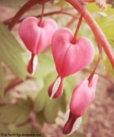 .:Bleeding Hearts:. by LT-Arts