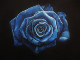 Blue rose by viki941116