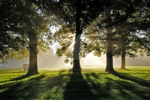 Misty Morning Sunlight through Oak Trees by thelastcelt