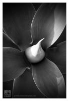 Agave by Garelito-Photos