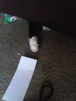 My cat's paw under the couch. by ErrorInTheSystem