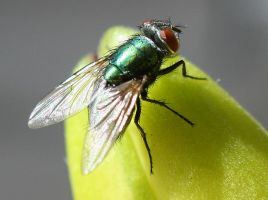 THE FLY by onlyalive8